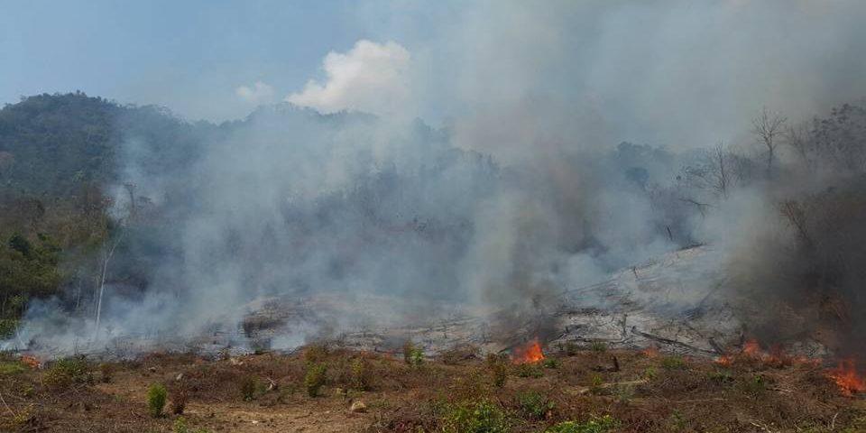 Incendios han consumido más de 300 hectáreas de bosques